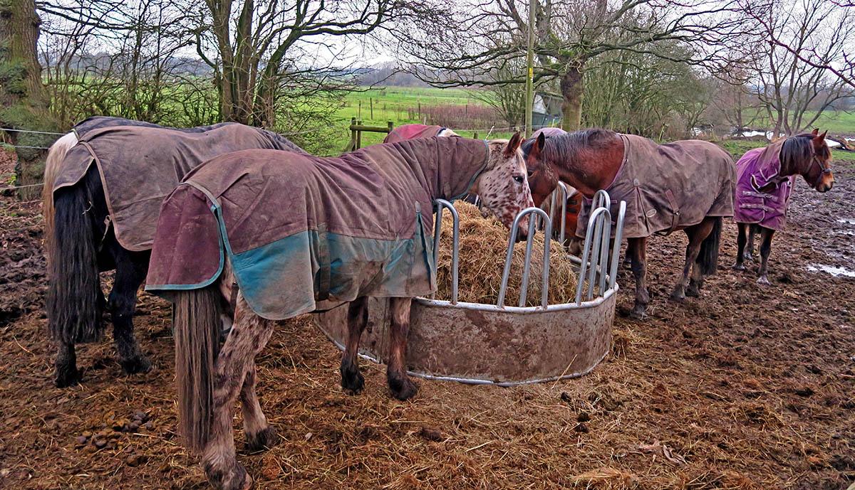 HousingITguy,Project365,2nd 365,HotpixUK365,Tone Smith,GoTonySmith,365,2365,one a day,Tony Smith,Hotpix,horse,horses,feeding,eat,eating,Arley,hall,Cheshire,field,Country,countryside,equine