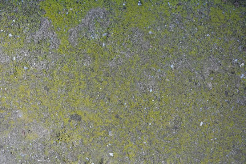 Mossy concrete texture #09