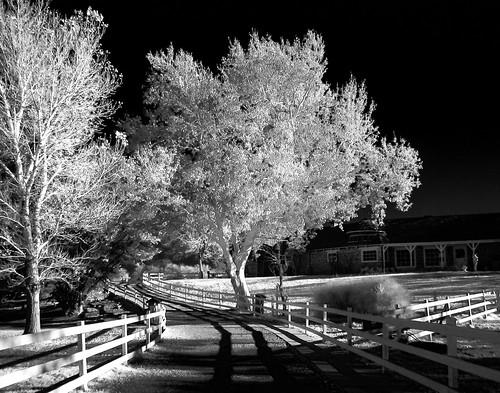 america canonpowershotelph180 mojavedesert nevada redrockcanyon southwest springmountainranch usa desert infrared landscape nature nearlasvegas monochrome blackandwhite