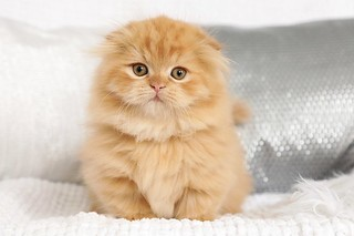 Cute kittens pictures | by dollfacepersiankittens.com