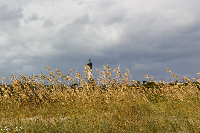 Reeds and clouds