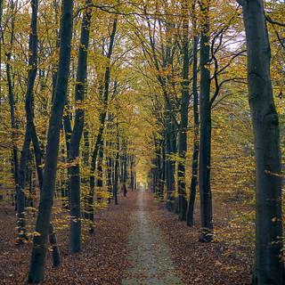 beauty of autumn | by Jos Mecklenfeld