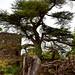 <p><a href=&quot;http://www.flickr.com/people/159479774@N04/&quot;>jeremymgoff</a> posted a photo:</p>&#xA;&#xA;<p><a href=&quot;http://www.flickr.com/photos/159479774@N04/46743360071/&quot; title=&quot;DSC_0414.jpg&quot;><img src=&quot;https://live.staticflickr.com/4824/46743360071_0ef0ed1fc0_m.jpg&quot; width=&quot;240&quot; height=&quot;192&quot; alt=&quot;DSC_0414.jpg&quot; /></a></p>&#xA;&#xA;