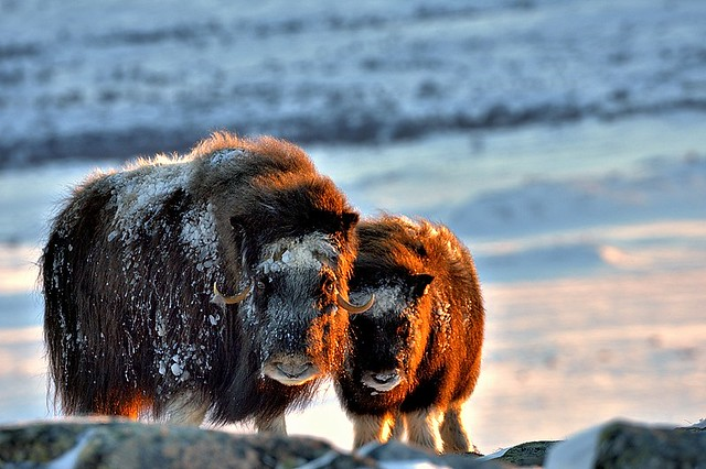 Norway, mother and son