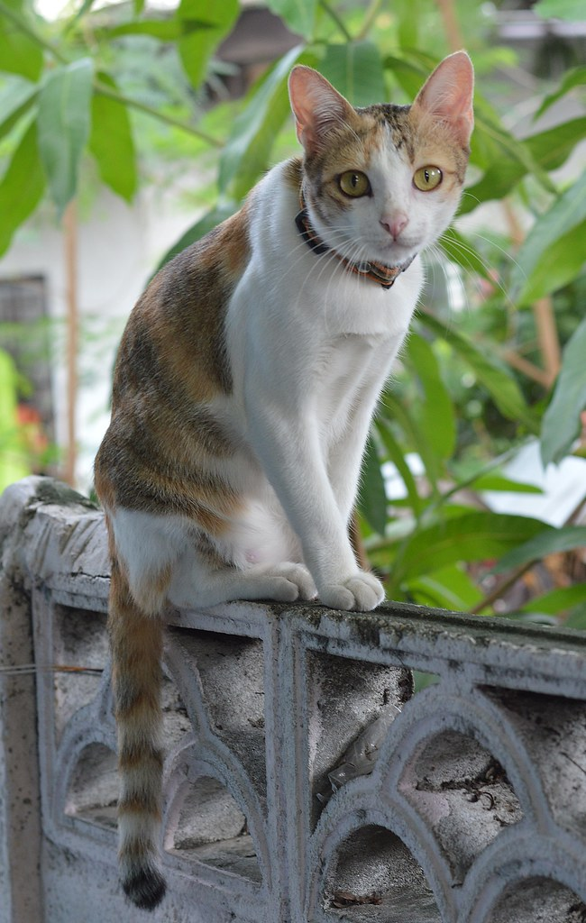 cat on top of a wall