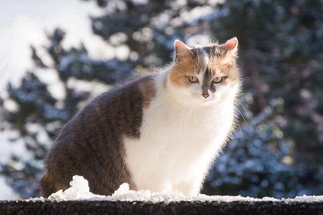 Mimi in the snow