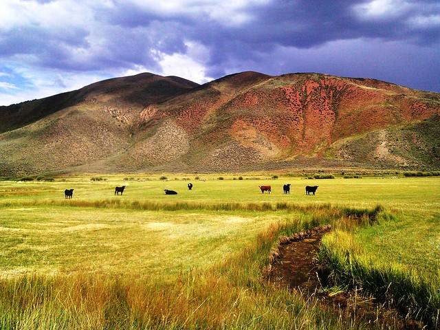 Wyoming Prairie, Home on the Range