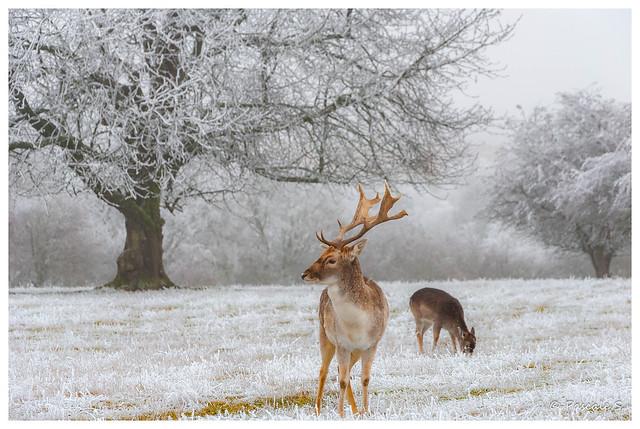 Rencontre au coeur de l'hiver
