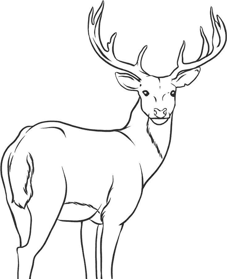 Geyik Ceylan Boyama Sayfası Deer Geyik Ceylan Boyama Say Flickr