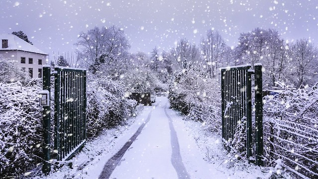 Winter - 6427