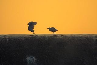 Bye Bye Take Care Kailas Bhopi Flickr