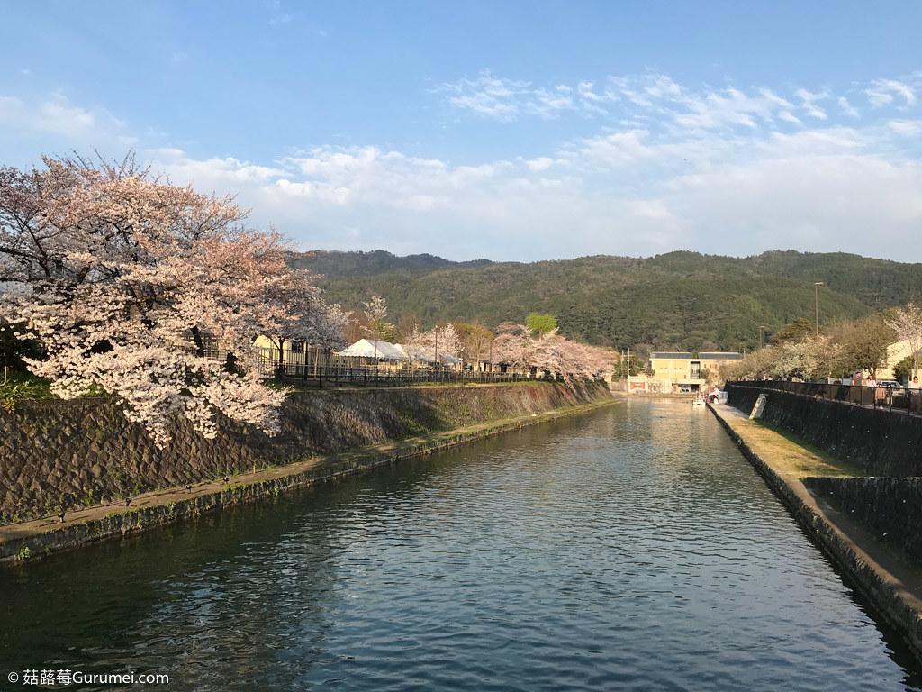 打工度假-京都生活-賞花、野餐-081
