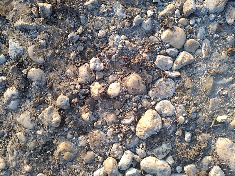 Ground Texture 14