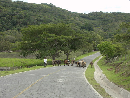 Sep/2014 - Cows grazing on the Nicaraguan hillsides (photo credit/ Dirk Hauke Landmann).