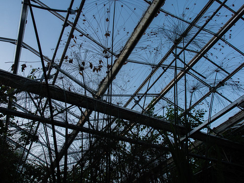 greenhouse bristol universityofbristol botanicalgarden stokebishop botanical sky outlines silhouette plants bare frame framework lookup up blue dusk sunset