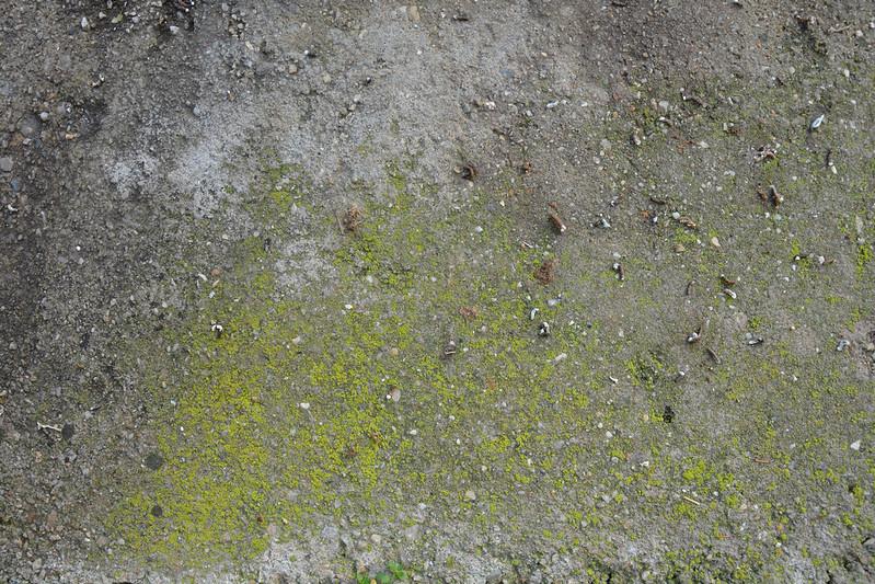 Mossy concrete texture #10