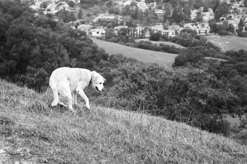 Dog On Steep Hill | by markjwyatt