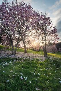 Spring is coming | by Peter Wayne