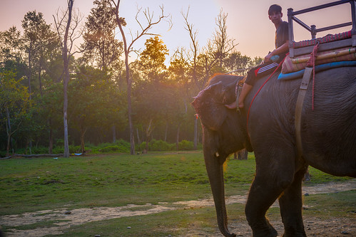 tibet2018 bharatpur narayanizone nepal np elephant sunset chitwannationalpark