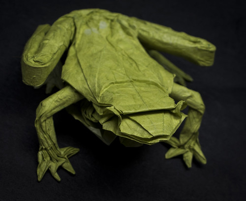 IOIO 2018 - Glass Frog 2 (above)