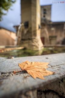 Dry Leaf   by fs999
