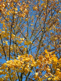branches and leaves | by cloversun19
