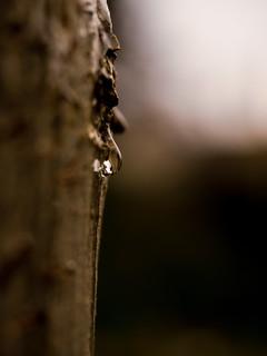 November rain | by Cagey75
