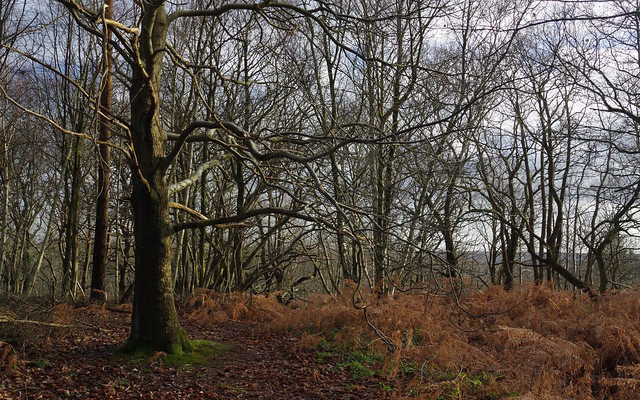 Perry Woods, Kent....