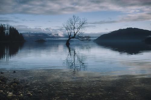 sunrise morning newzealand tree lone thatwanakatree shoreline lake wanaka reflection southisland otago aotearoa august winter water nz landscape nature