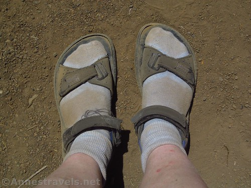 Hazards of the trail: dusty feet.  Nampaweap, Grand Canyon Parashant National Monument, Arizona