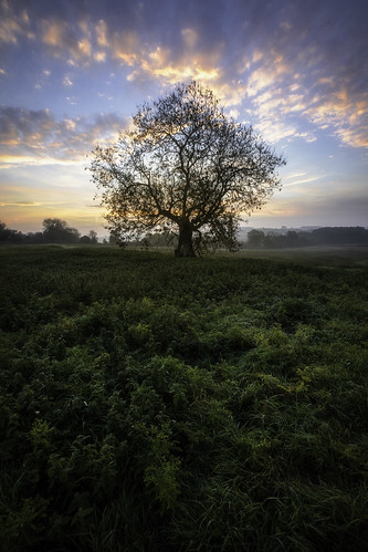 england castleacre castleacrepriory morning tree early sky sunrise history priory norfolk travel uk grass dew clouds color church photography wanderlust explore