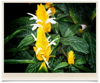 Sonnenberg Gardens & Mansion Historic Park ~ Canandaigua NY  - Exotic Yellow Flower | by Onasill ~ Bill Badzo