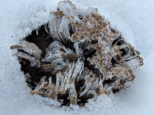 Needle ice | by jaundicedferret