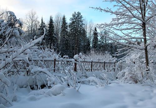 Our Winter | by irishishka