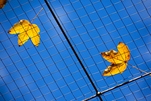 Leaves On The Grid | by MarkusR.