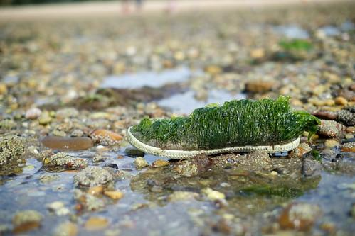 Shoe covered in seaweed   by Sebastiaan ter Burg
