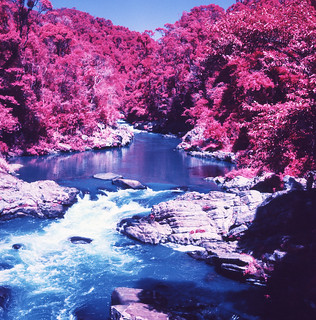 Red Riverbank | by TAZMPictures