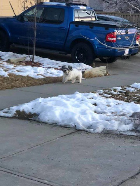 SIGHTING black w/ white dog in #SignalHill Signature Rise and Sirocco Dr SW (403)613-7028 Pls share watch RT to get home. Do not chase YYC Pet Recovery shared Casondrea Sproul's post. Is this your dog? I couldn't catch him. Seen running on the side walk o