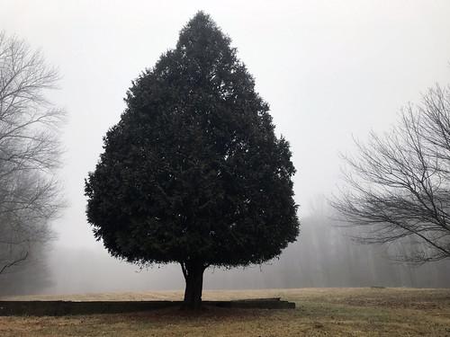 A tree outstanding in its field