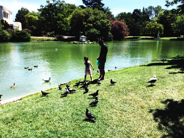 Parc borrely  la petite fille le papa les pigeons et autres Marseille ☀️🐠🐧🐣