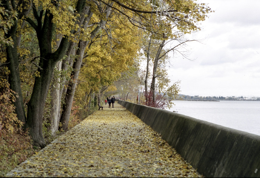 Walking Along The Wall of Leaves