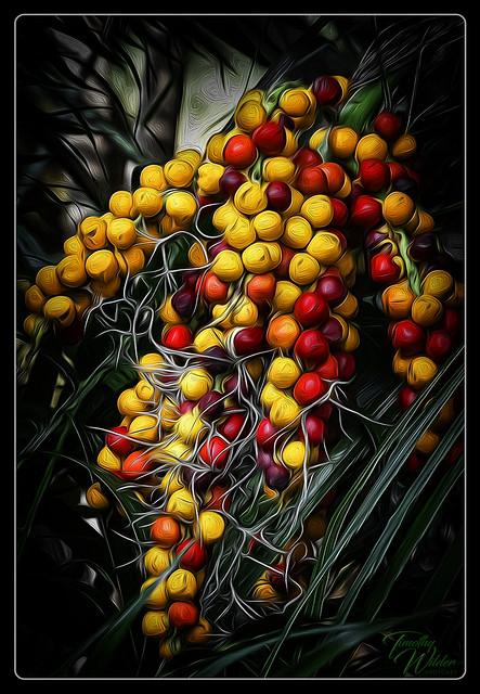 The Fruit of the Garden