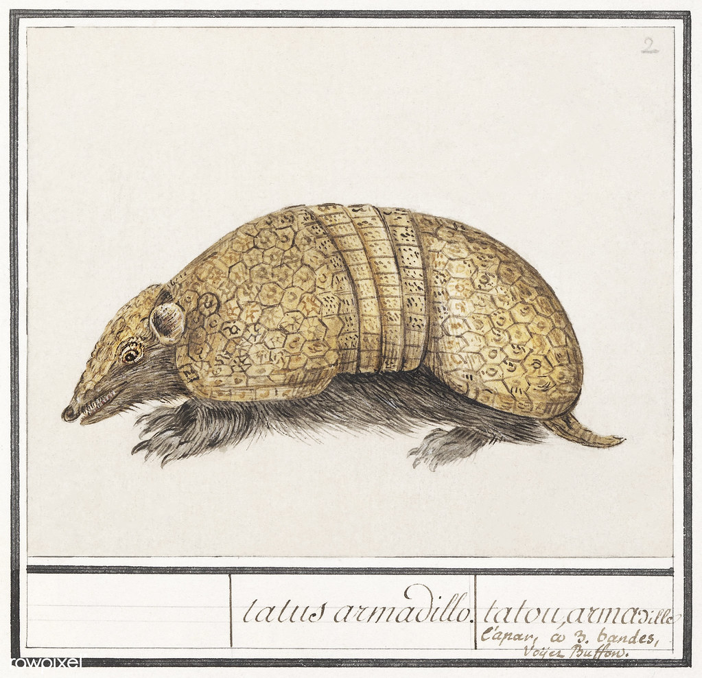 Armadillo in vintage style