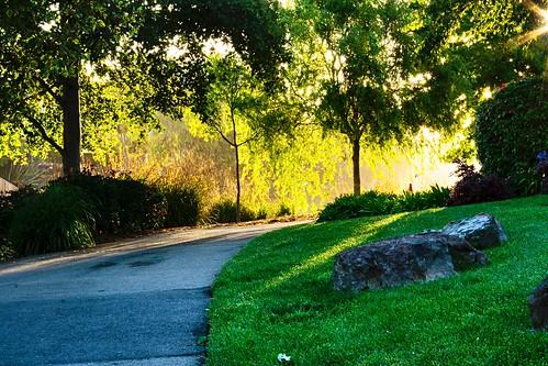bright shine свет sunrise morning природа nature flora парк park красивый beautiful beaty cool цвет colour синий голубой blue зелёный green растение plant прогулка walk наслаждаться enjoy пруд pond река river вода water отражение reflection небо sky alameda california