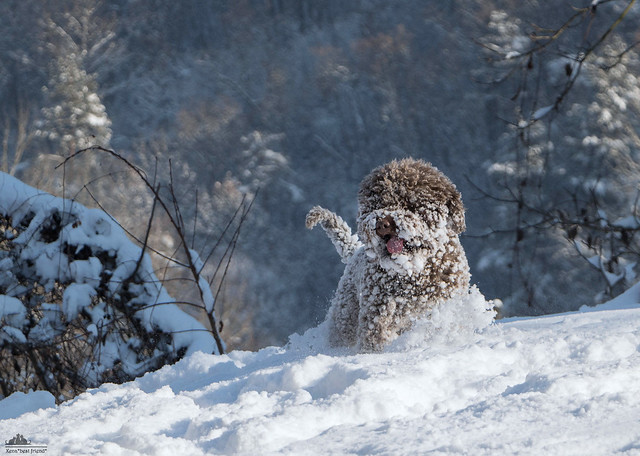 ❅ Tobia, The Snow Dog ❅