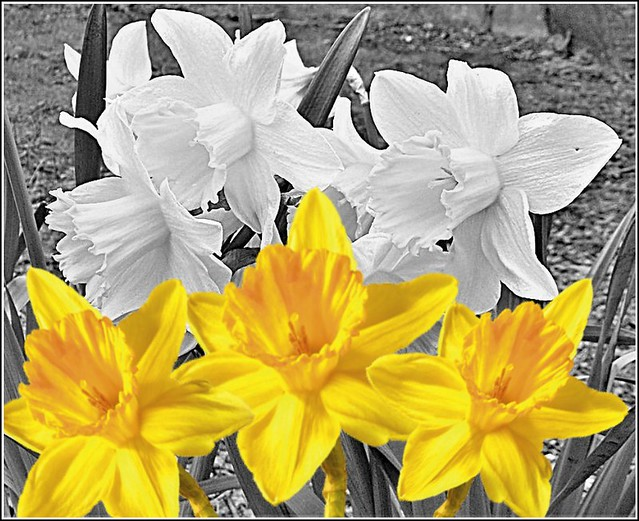 White & Yellow...