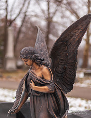 Cemetery Angel 9