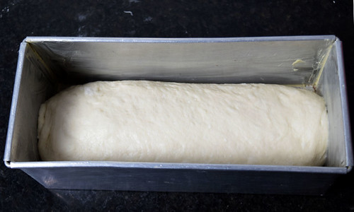 White Bread Dough Second Rise