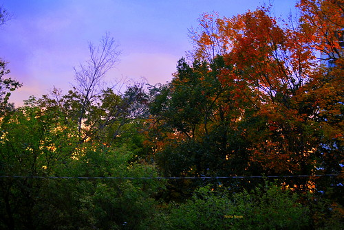 autumn sunset fall leaves twilight red colour color
