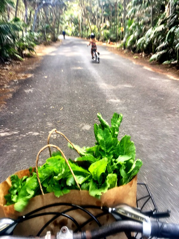 Lord Howe Island : Riding back from Thornleigh Farm. Basil, parsley and roquette!